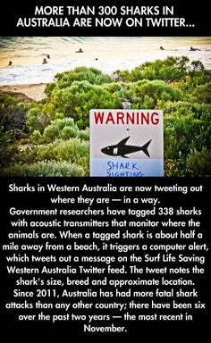 I think this is good for people AND the sharks The More You Know, Good To Know, Faith In Humanity Restored, Marine Biology, Hai, Wtf Fun Facts, Science, Beach Signs, Shark Week
