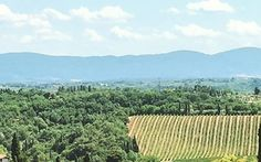 Tuscany, Italy is truly a magical place!  #tuscany #italy #vivatuscanytours www.vivatuscanytours.com