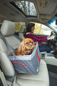 Large Dogs, Small Dogs, Pet Booster Seat, Biking With Dog, Dog Gadgets, Dog Car Seats, Dog Travel, Cute Dogs And Puppies, Pet Carriers
