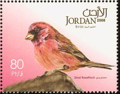 Sinai Rosefinch stamps - mainly images - gallery format