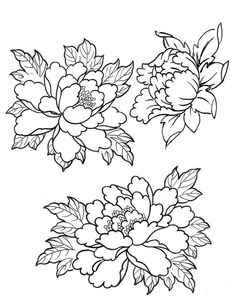 rose and peony line drawing - Google Search
