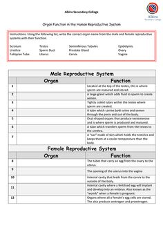 free printable female reproductive system worksheet all free printable pinterest female. Black Bedroom Furniture Sets. Home Design Ideas