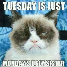 #MOVEINSPECIALS #NOGIMMICKS #LOWRATES @SENTRY SELF STORAGE @ 4901 E ADAMO DR. TAMPA, FL 33605 813-248-6569 Look At Me, Teacher Humor, Grumpy Cat, Tuesday, Cats Of Instagram, Nice, Funny Quotes, Animals, Verses