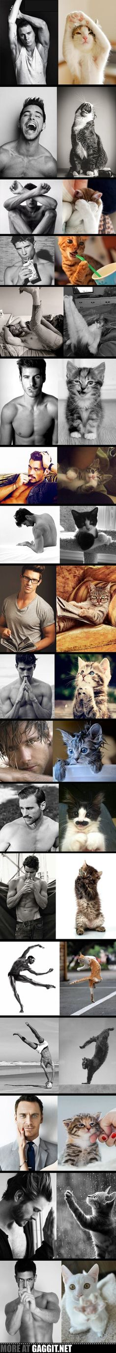 Cats vs men I can't stop laughing!