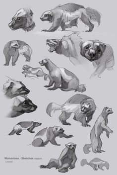 S art animal drawing reference animal sketches, an Wolverine Animal, Wolverine Art, Animal Sketches, Animal Drawings, Art Drawings, Character Art, Character Design, Carnivore, Sailor Neptune