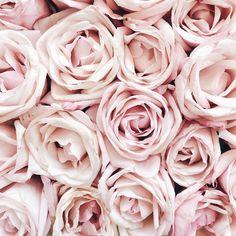 la vie en rose (via @thepinkdiary)
