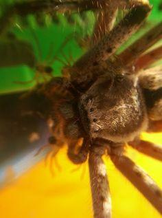 Taken on a mobile phone by Kai Debrovski. Nice work. #amazing #spider