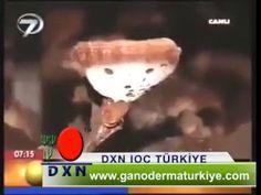 Dr. Ertuğrul İlbay Reishi Mantarı-www.ganodermaturkiye.com 0850 808 26 76