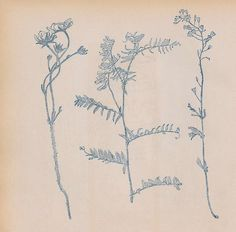 leopold stolba, 1902.