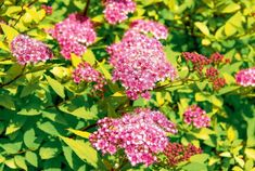 Walled Garden, Flora, Plants, Inspiration, Biblical Inspiration, Fenced Garden, Plant, Inspirational, Planets