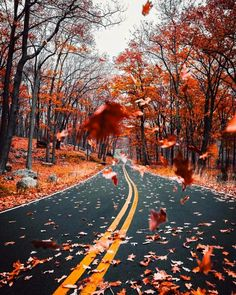 Image shared by Find images and videos about nature, autumn and fall on We Heart It - the app to get lost in what you love. Autumn Photography, Landscape Photography, Illustration Photo, Autumn Cozy, Autumn Fall, Autumn Scenery, Autumn Aesthetic, Cozy Aesthetic, Fall Wallpaper