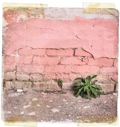 Old pink brick wall