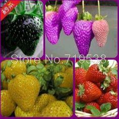 야채 심기 발코니 냄비 보냈다 사계절 딸기 과일 씨앗 100 개