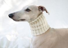 Snood for Whippets / Pashmina / Cream. €22.00, via Etsy.