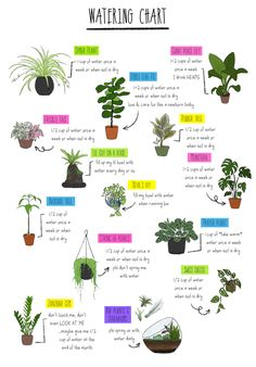 The easiest, and prettiest, house plants to keep alive House Plants Decor, Plant Decor, Indoor Garden, Indoor Plants, Plantas Indoor, Household Plants, Belle Plante, Fiddle Leaf Fig Tree, Pothos Plant