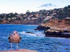 Lá Jolla é um tesouro natural em San Diego, um dos destinos de Praia mais populares da Califórnia. Fica apenas uns quinze minutos do centro da cidade, la você encontra diversos restaurantes, lojas e galerias. Se estiver em  San Diego, passe uma tarde em Lá Jolla, com certeza será um passeio incrível!  #deusnocomando#deusnocomandosempre#obrigadadeus#lajolla#sandiego#california#mundograndevidacurta#wanderlust #lajollalocals #sandiegoconnection #sdlocals - posted by Mundo Grande Vida Curta…