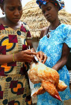 Femmes poule, Sénégal.