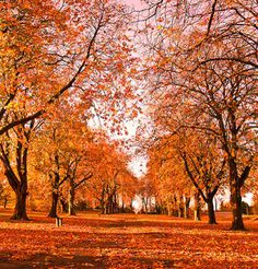 i would skip down the entire cement pathway and toss leaves into the air and finally collapse into an ocean of orange-y red. Scenic Photography, Autumn Photography, Autumn Day, Autumn Leaves, Fall Trees, Images Pirates, Fall Clip Art, Autumn Scenes, Fall Photos