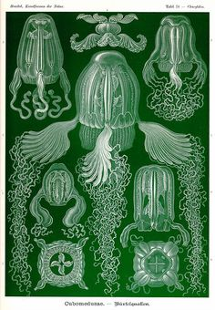 Art Forms in Nature - Ernst Haeckel