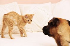 How To Introduce A Dog To A Cat... The Right Way. Introducing a dog to a cat can be stressful. These expert tips will help you make a smooth transition.