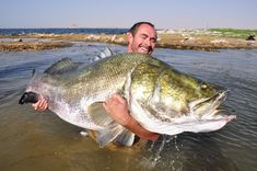 One of the major threats to swamps and marshes today is invasive species. An example of this is the introduction of the Nile Perch into Lake Victoria which has pushed many of the lake's cichild species into extinction.