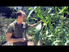 Mike Scott on Growing Corn