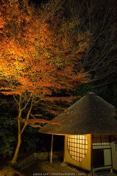 Autumn in Kyoto, Jap mother nature moments