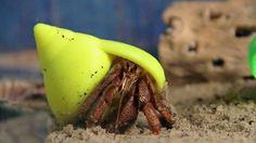 3d printed hermit crab shells