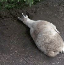 17 Times Llamas Were Majestic