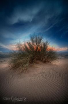 Desert Plant ...Like a Painting!!