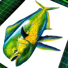 Tim Jeffs Art — My Mahi Mahi colored pencil drawing is 99%...