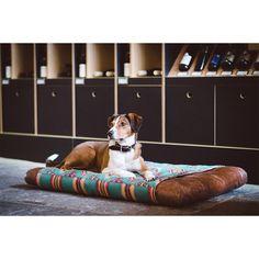 "Hundekissen ""Louisiana Konya-Aqua"" | thedogshop"