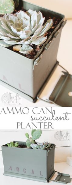 Use an ammo can as a planter for succulents! Great gift idea dads and men!