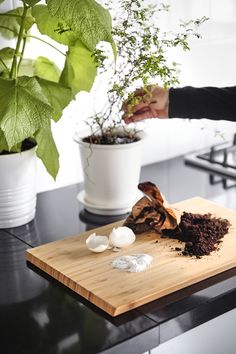 Ground egg shells and coffee grounds sit on a wooden chopping board in front of a potted plant. Faire Son Compost, Ikea Portugal, Wooden Chopping Boards, Ways To Recycle, Ideias Diy, Food Waste, Egg Shells, Butcher Block Cutting Board, Potted Plants