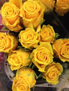Rose 'Golden Ambition'...Sold in bunches of 20 stems from the Flowermonger the wholesale floral home delivery service.