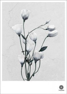 Vee Speers poster by ViSSEVASSE. The flower Anthurium Andreanum is from the series Botanica. Vee Speers, Fine Art Photography, Nature Photography, Poster Store, Macro Flower, Eco Friendly Paper, Ikebana, Traditional Art, Decoration