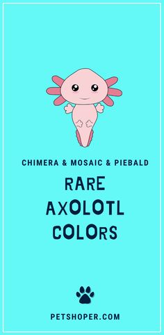 Other than the unique colors, there are different rare axolotl colors. These colors also cost more since they are rare.  They include the Chimera, mosaic, and piebald. #RareAxolotlColors  #axolotl #axolotls #WalkingFish  #AxolotlColors #MexicanSalamander Axolotl Care, Axolotl Pet, Unisex Name, Gender Neutral Names, Creative Names, Cute Names, Binky, Cool Pets, S Girls