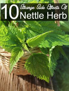 We are not recommending that you should stop its use, but use it in the right amount. Given below are some of the side effects of nettle.