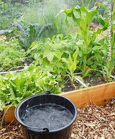 De drie grootste fouten   Makkelijke Moestuin Growing Herbs, Fruit, Outdoor Gardens