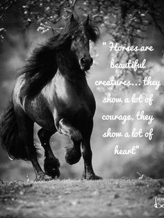 There is nothing like a horse with a lot of heart....