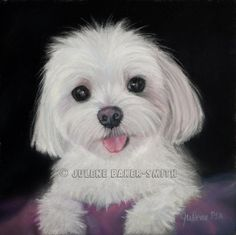 This absolutely adorable little Maltese is Crissy and was a commissioned pastel.    The Maltese is spirited, lively and playful. Gentle, loving,