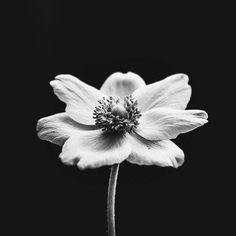 The only one that matters #flower #macro #isolation #monochrome #blackandwhite #bnw #monochromatic #potd #photooftheday #abstract #shadows #s2s2s2dio #justsaytheword