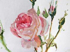 Rose, aquarelle on paper