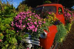 Vintage Pickup Truck Used as Flower Planter
