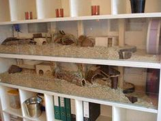 Post with 68 votes and 5892 views. Tagged with , ; Shared by Amazing hamster cages Hamster Tank, Hamster Diy Cage, Diy Guinea Pig Cage, Guinea Pig House, Hamster House, Guinea Pigs, Hamster Life, Baby Hamster, Gerbil Toys