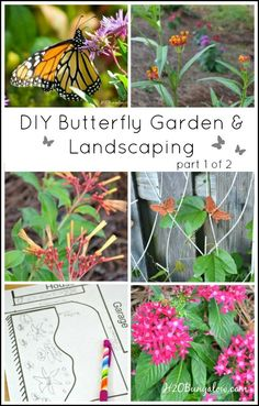 DIY butterfly garden and landscaping part 1 of 2 covers researching, plant selection, and layout for your new landscaping or butterfly garden. Also includes useful links for resources by H2OBungalow.com/?utm_content=bufferb1e2f&utm_medium=social&utm_source=pinterest.com&utm_campaign=buffer