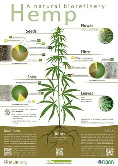 Home - MultiHemp - Multipurpose hemp for industrial bioproducts and biomass