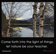 Come forth into the light of things, let nature be your teacher. ~Wordsworth