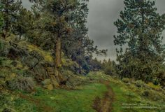 Moody Park by mclones on Michael Simmons, Country Roads, Park, Places, Parks, Lugares