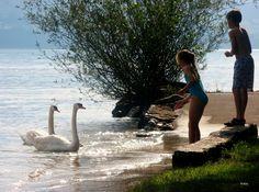 Mi versión del lago de los cisnes